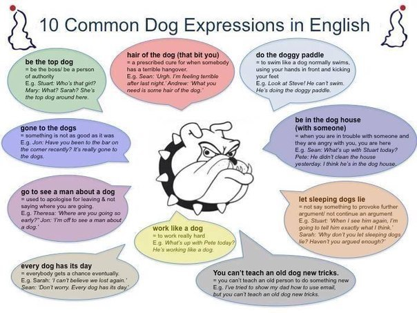 english based idioms english language essay Here is the list of most commonly used english idioms with meanings and examples english language idioms very useful, my academic essay will improve from now on.